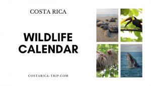 Wildlife Calendar Costa Rica