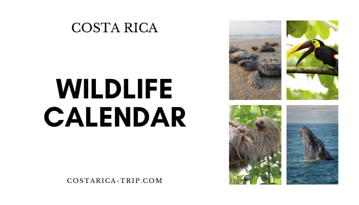 Wildlife Calendar Costa Rica