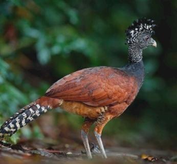 Birding in Golfito
