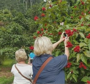Casa Orquideas Botanical Garden Tour