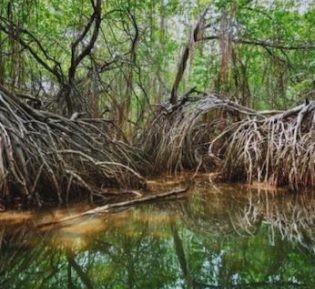 Golfito Mangrove Boat Tour