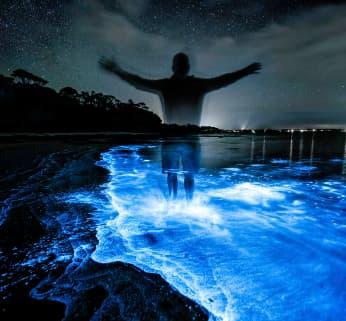 Golfo Dulce Bioluminescence Tour