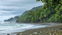 corcovado-national-park-one-day-tour-from-san-jose-in-san-jos-646321